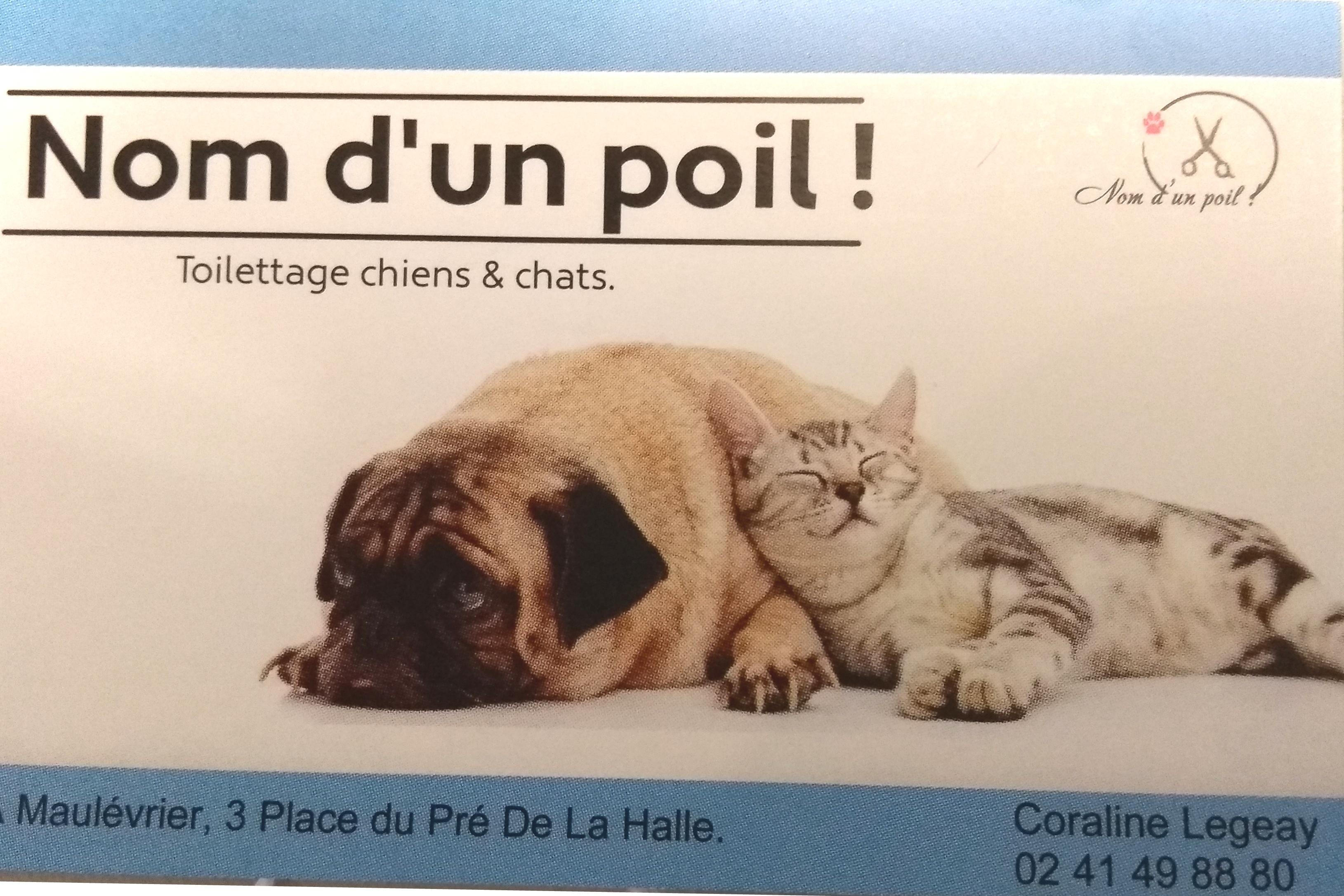 Douceur Canine